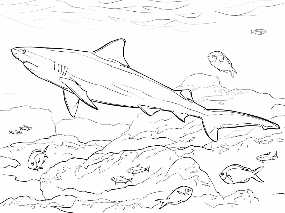 Акула под водой - раскраска №1063 | Printonic.ru