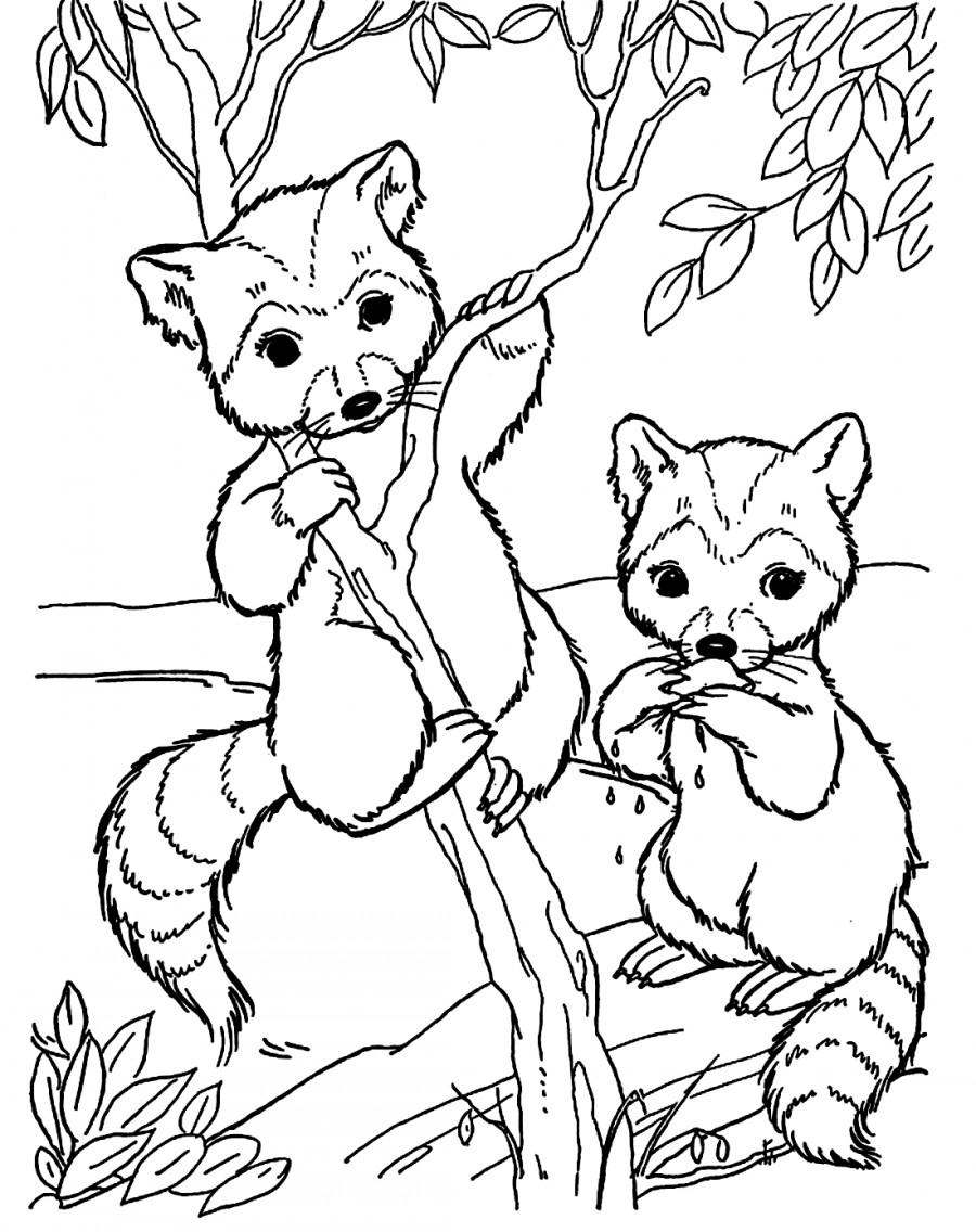Два енота на дереве - раскраска №1163 | Printonic.ru