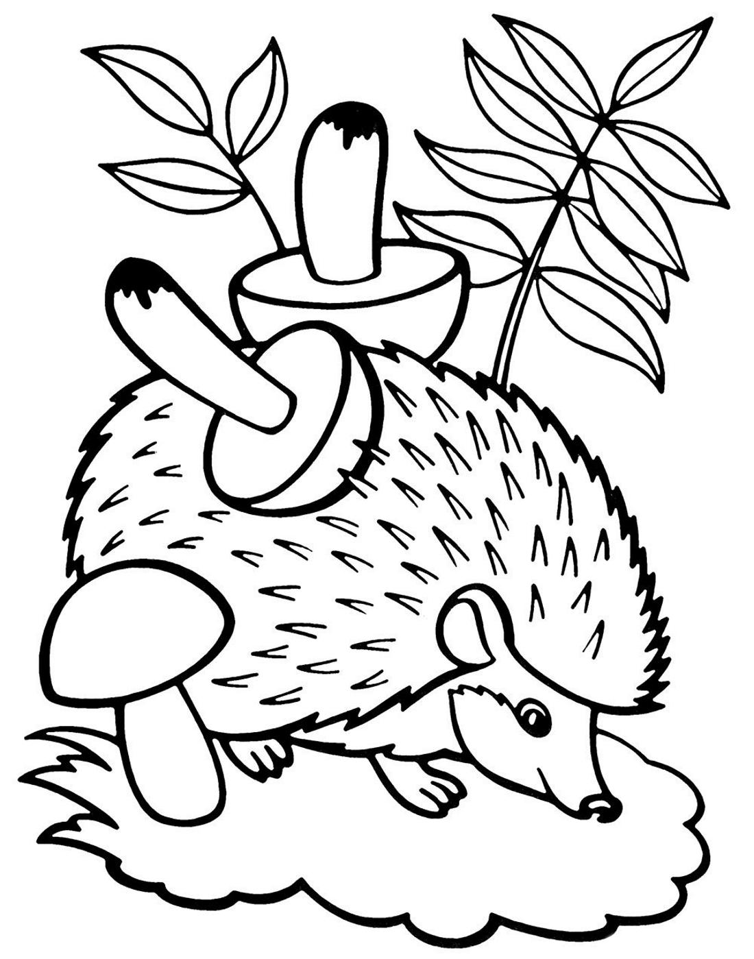Ежик собрал грибы - раскраска №1157 | Printonic.ru