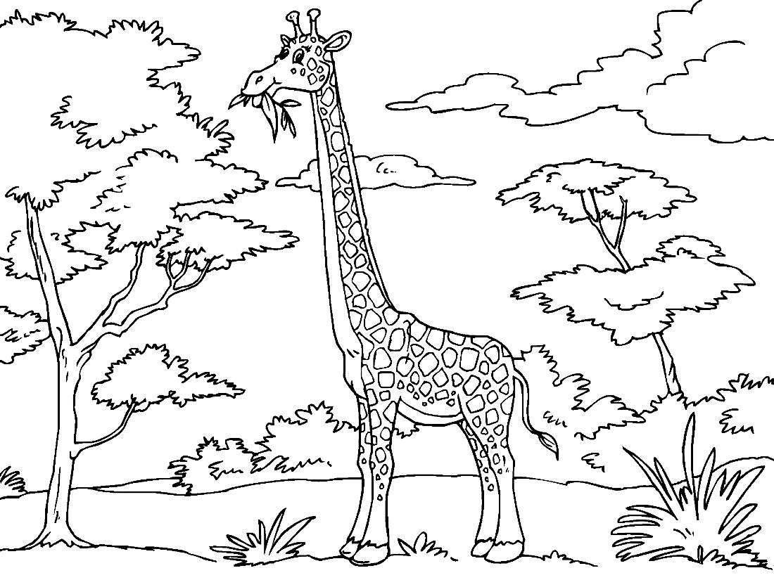 Жираф в раскраске для детей картинки