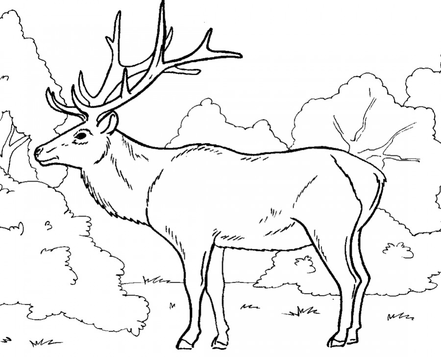 Большой олень - раскраска №1424 | Printonic.ru