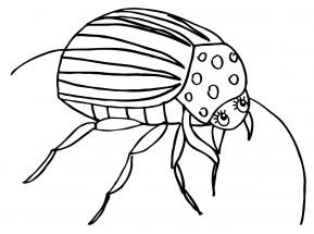 жук раскраски для детей на тему жуки раскраски с жуками | 215x289