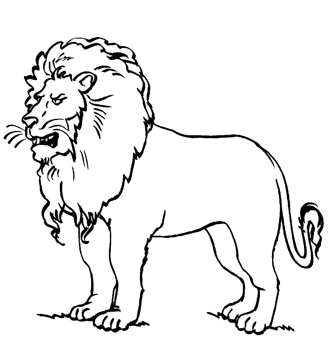 Картинки раскраски львы