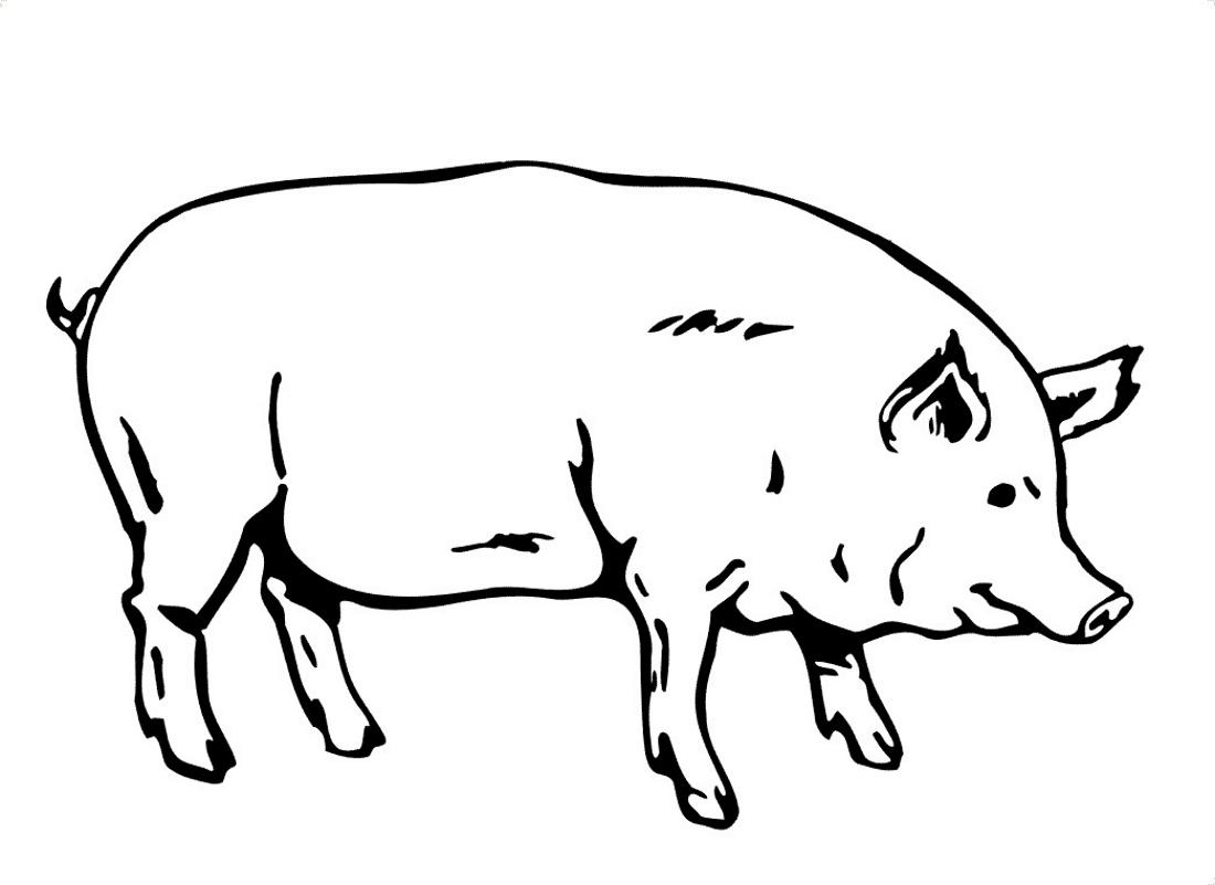 Свинья как настоящая - раскраска №2287   Printonic.ru