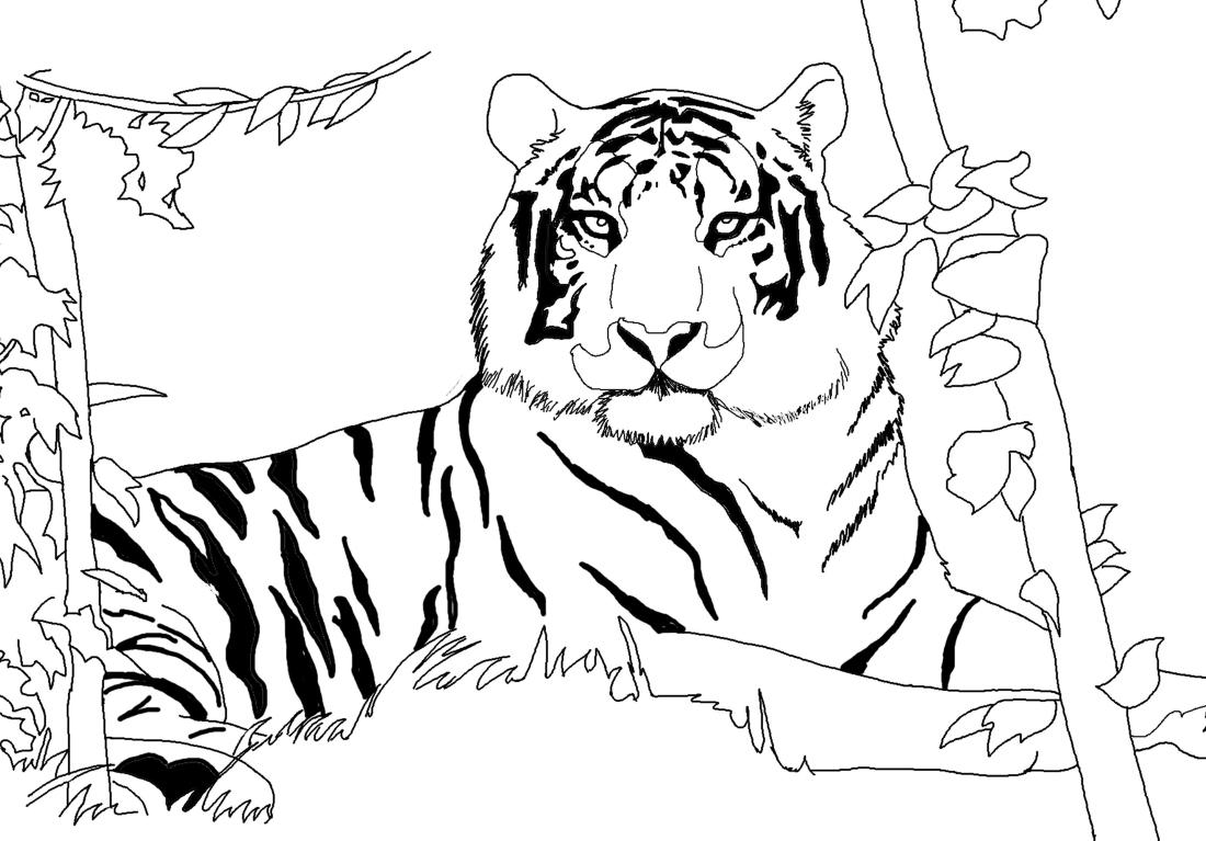 амурский тигр раскраска с описанием титанов
