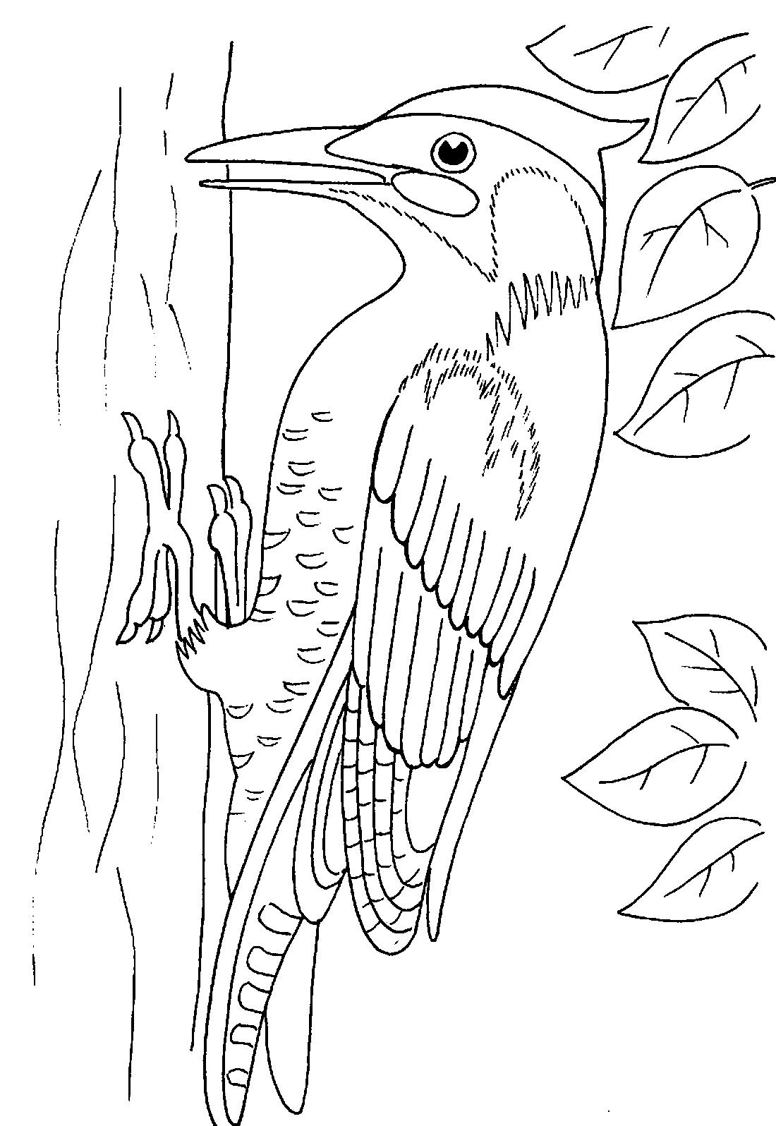 Дятел на дереве - раскраска №2037 | Printonic.ru