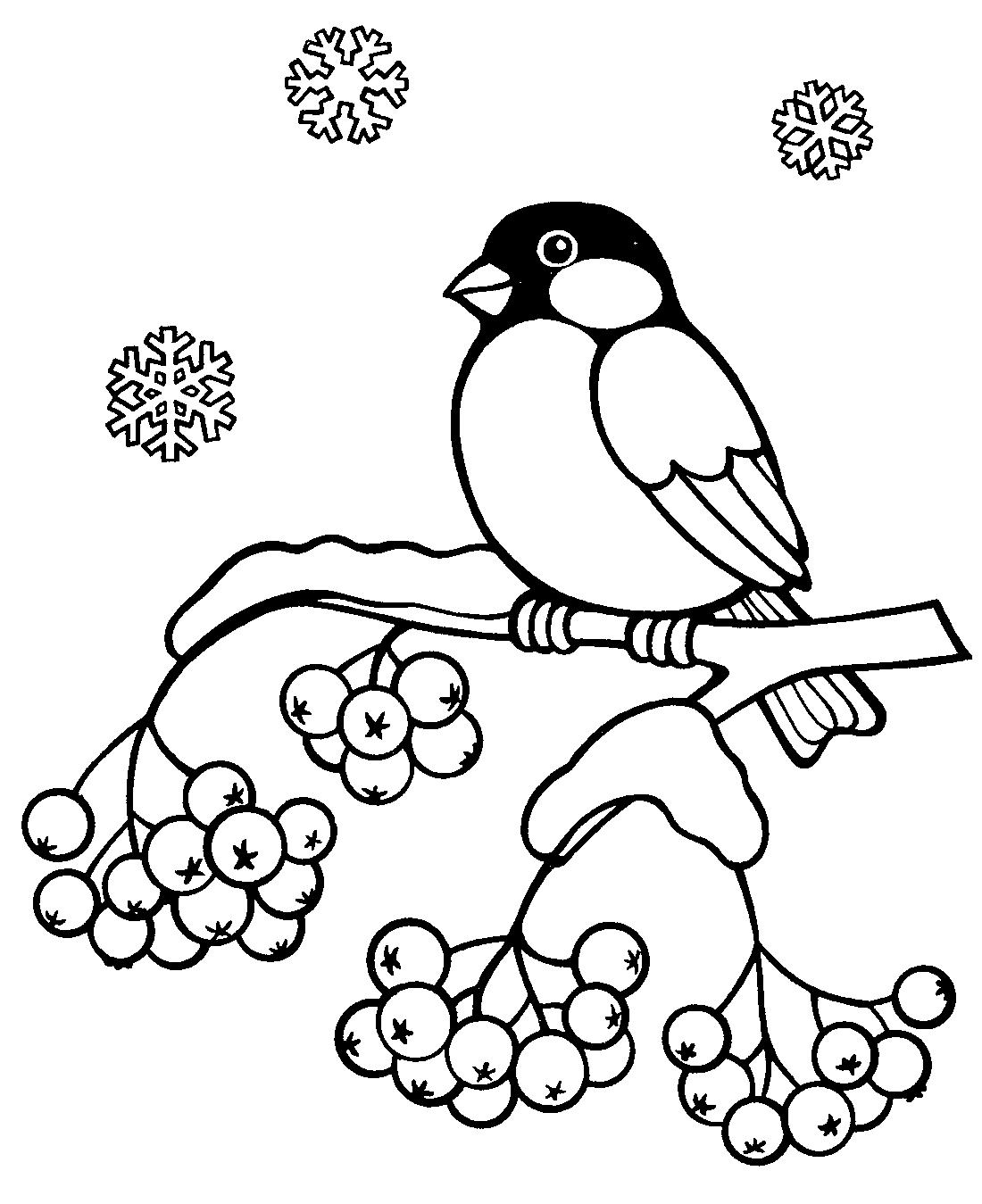 Картинки для детей снегирь на ветке рябины