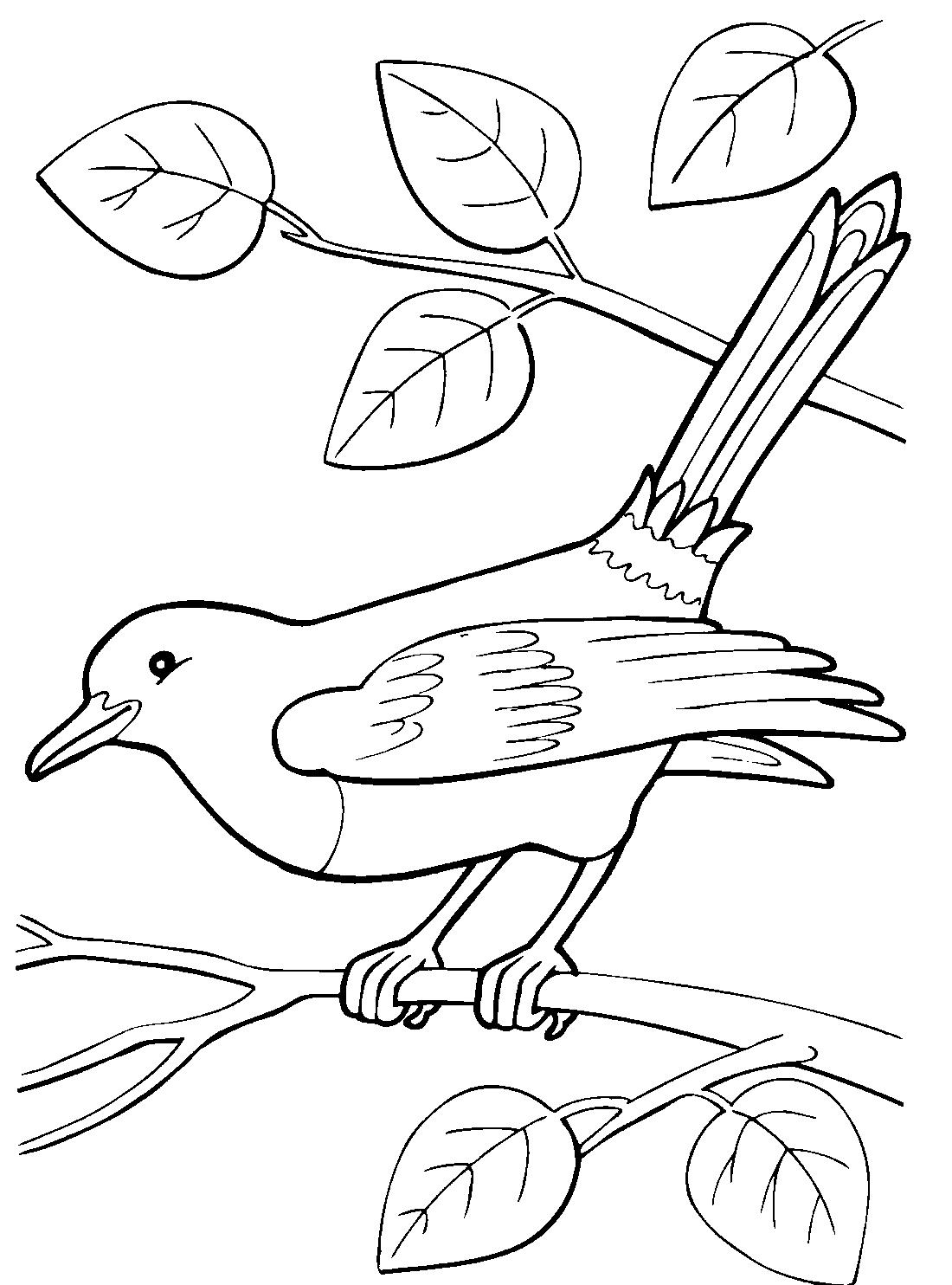 перелетные птицы печатать мытья