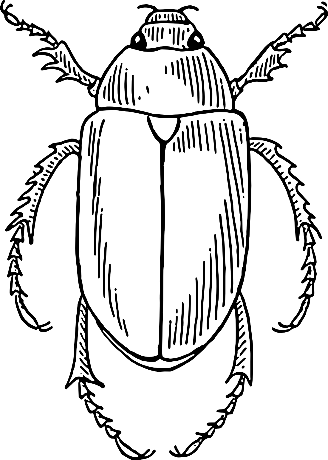 Картинка жука раскраска для детей