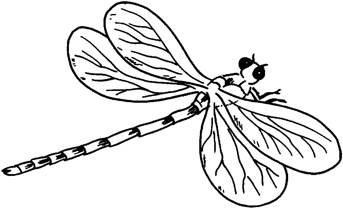Стрекоза в полный рост - раскраска №2077 | Printonic.ru