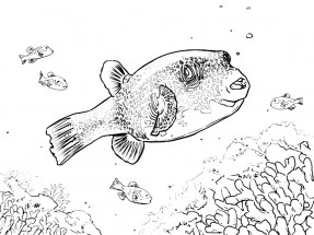 Раскраски рыба ёж: распечатать или скачать бесплатно ...