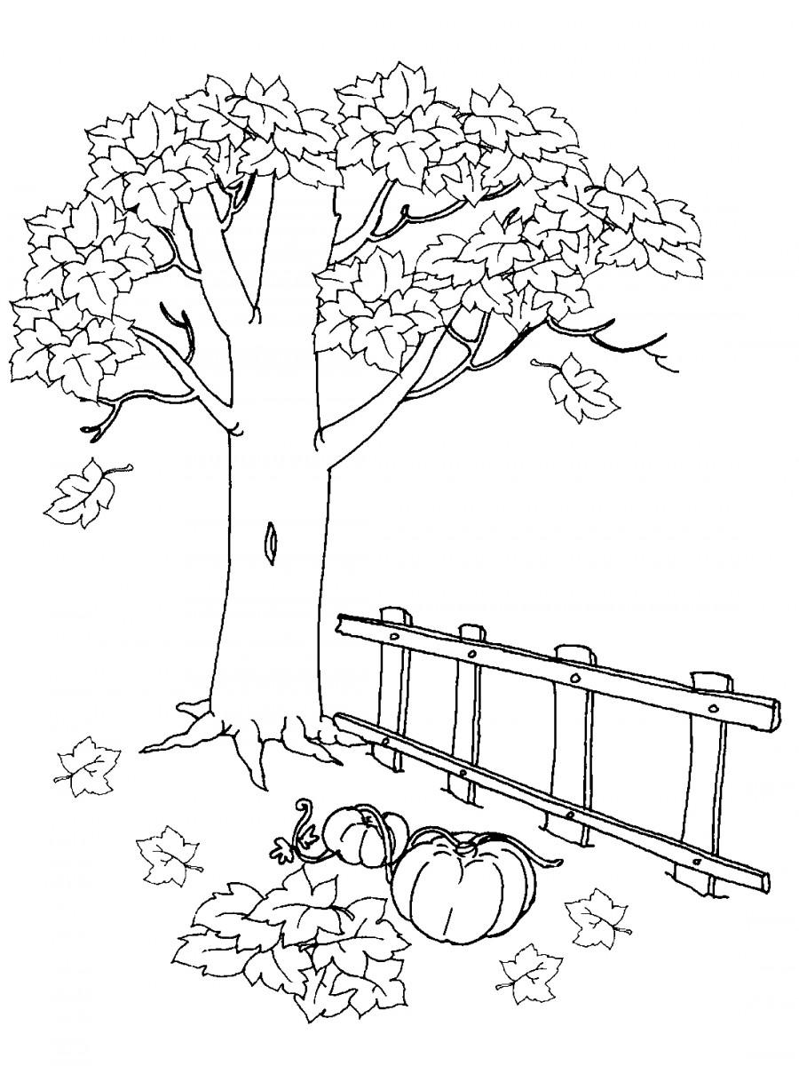 Дерево осенью - раскраска №3049   Printonic.ru