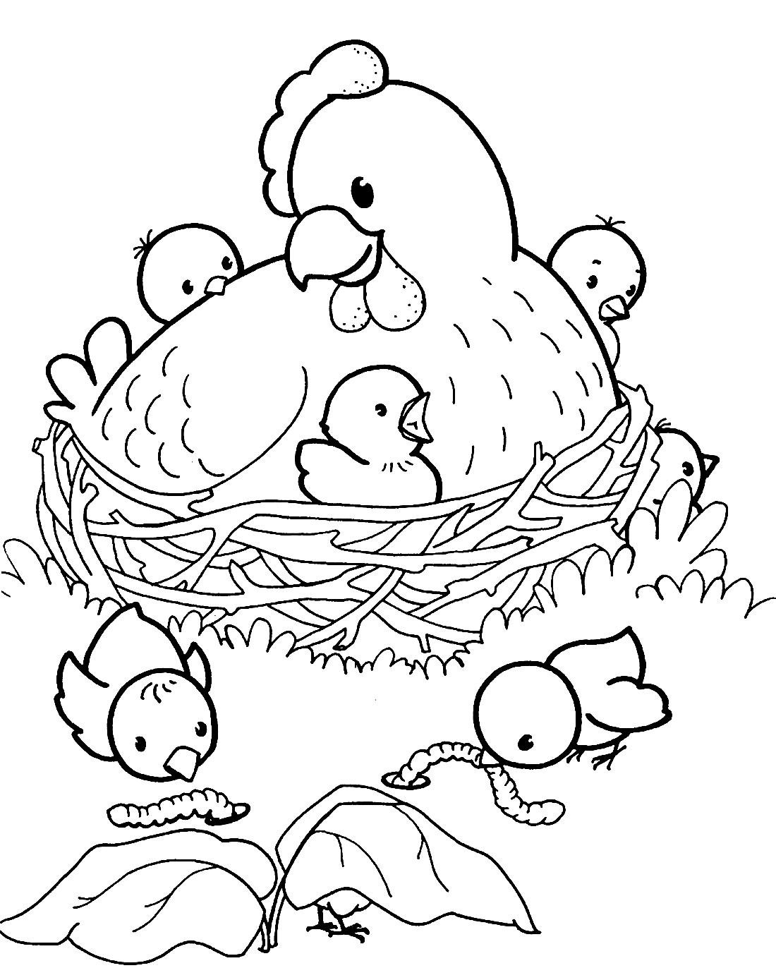 Раскраска курица с цыплятами