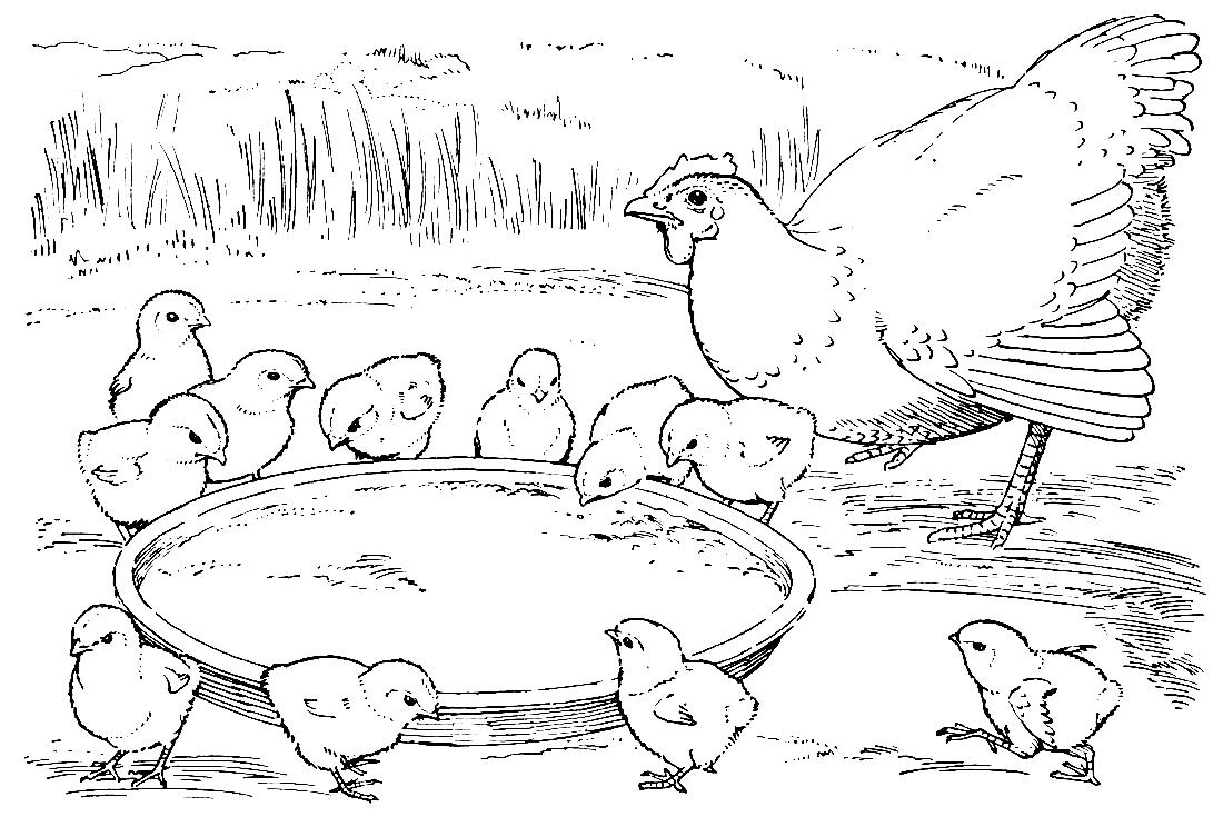 Рисунки цыпленка и курицы