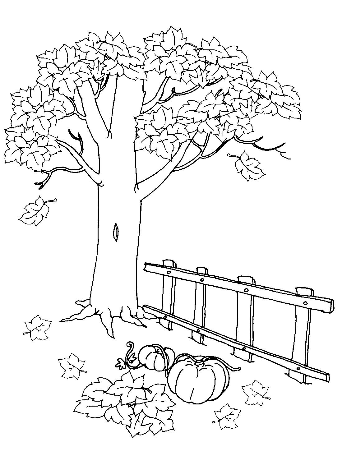 Дерево осенью - раскраска №3049 | Printonic.ru