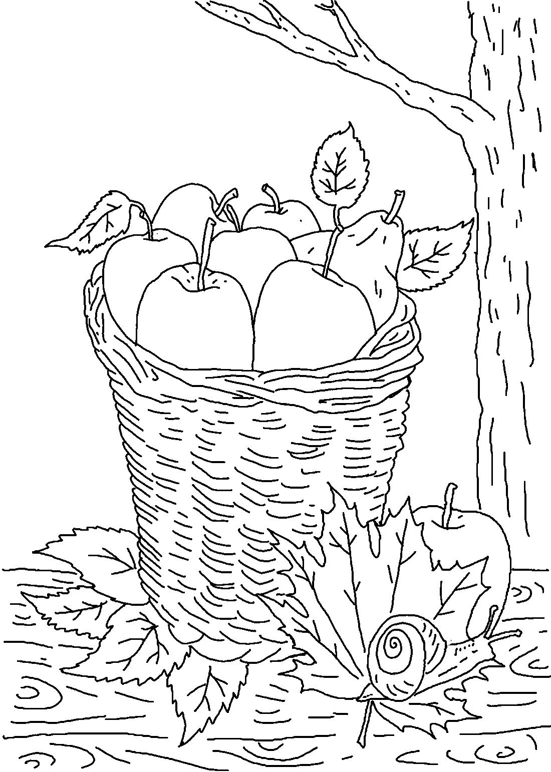 Осенний урожай в корзине - раскраска №13655 | Printonic.ru