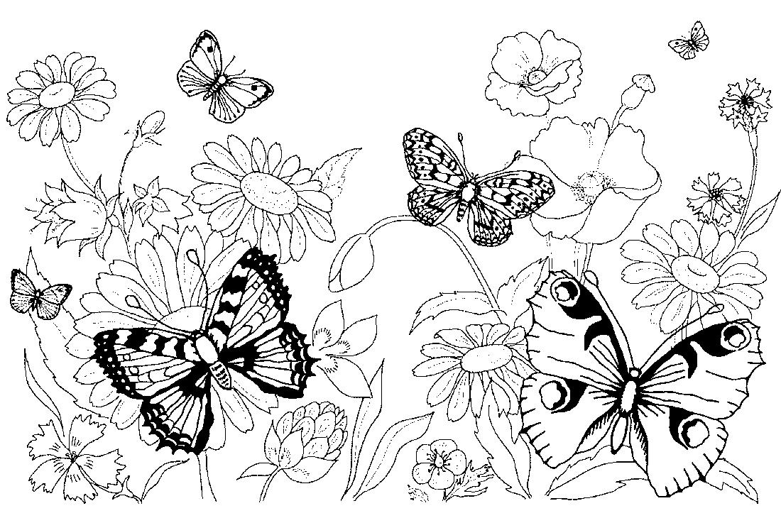 Летняя природа и бабочки - раскраска №5339   Printonic.ru