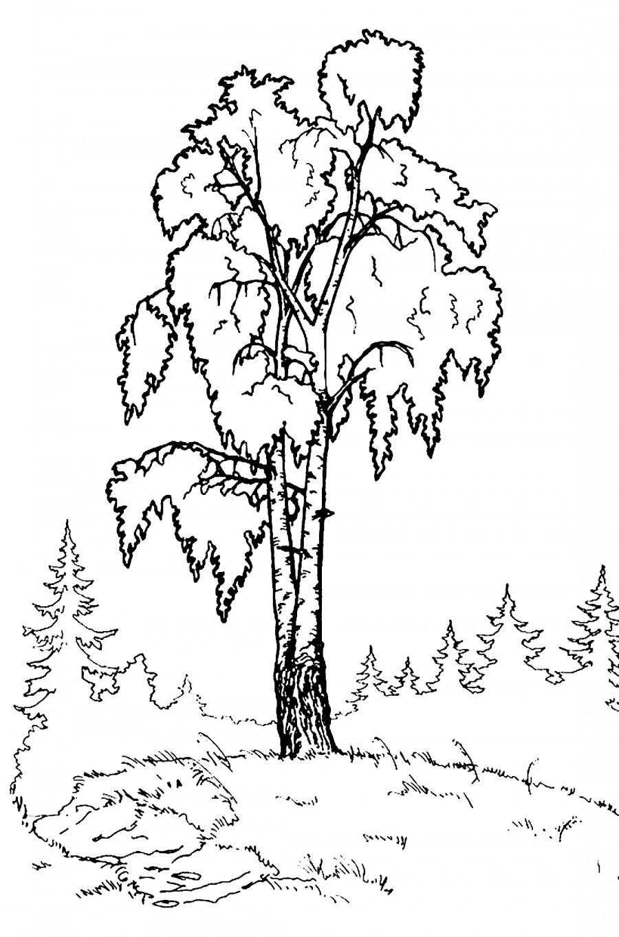 Береза на полянке - раскраска №3989 | Printonic.ru