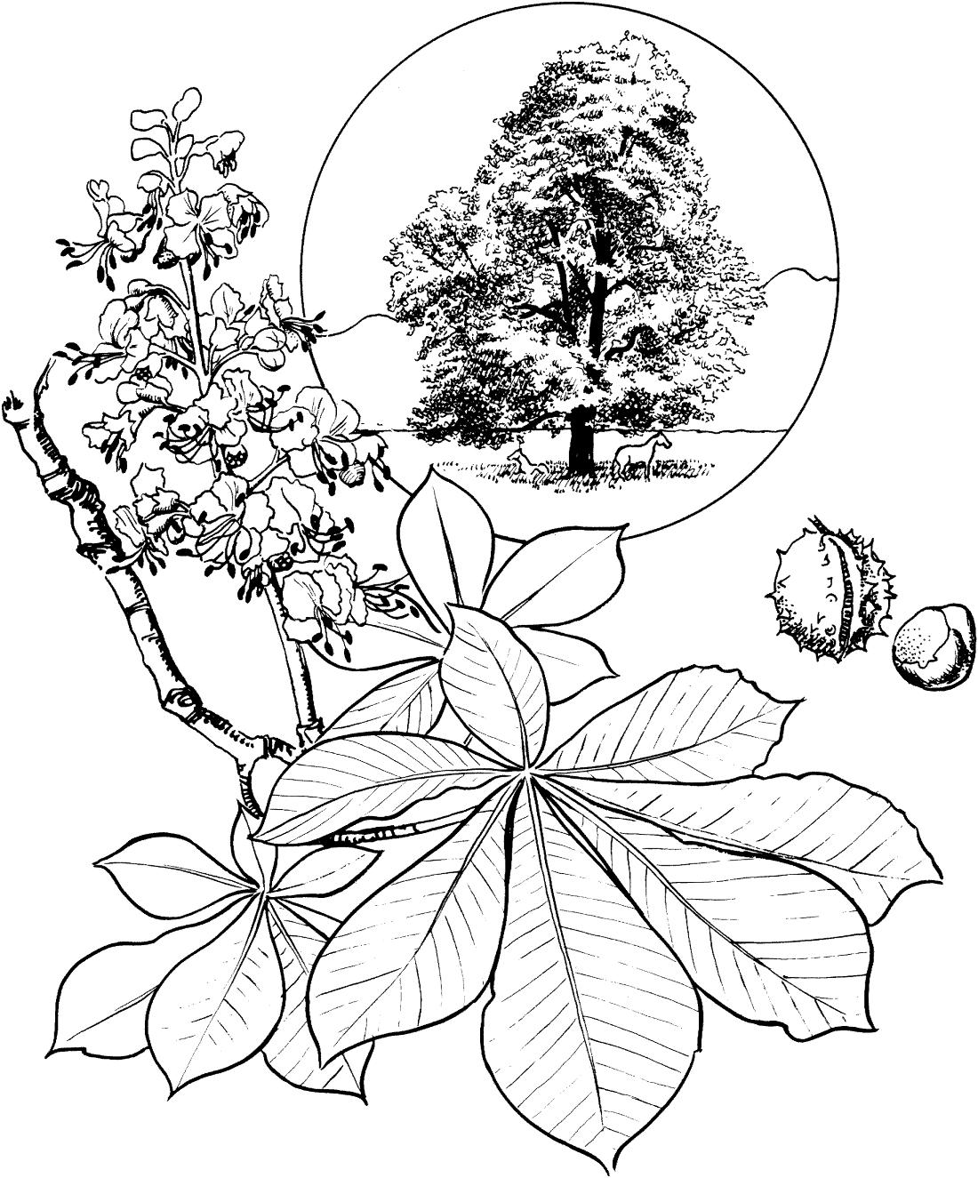 Деревья и кустарники картинки раскраски