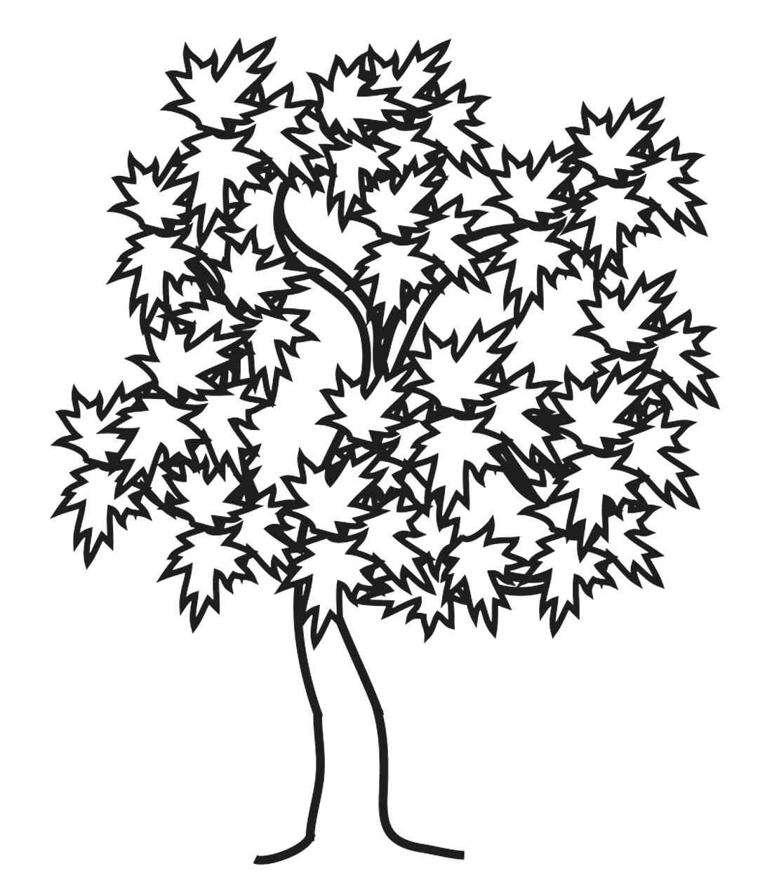 Кленовое дерево - раскраска №14084 | Printonic.ru
