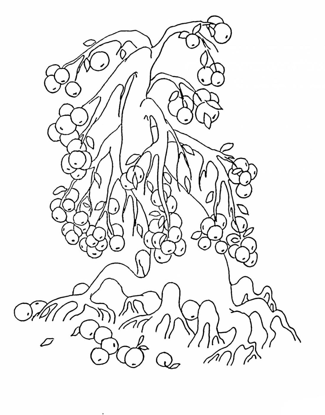 Много яблок на дереве - раскраска №11400 | Printonic.ru