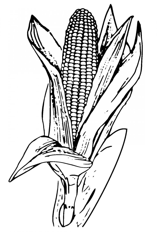 Кукуруза большая - раскраска №4107 | Printonic.ru