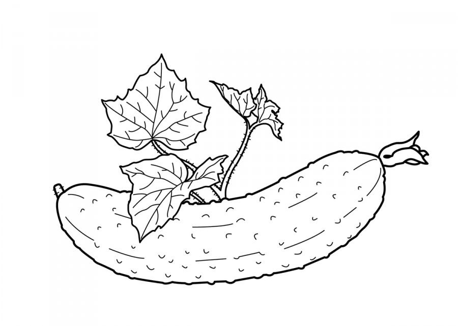 Огурец с листочками - раскраска №10429   Printonic.ru