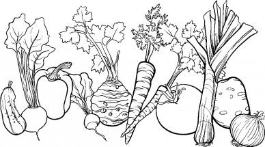 Раскраски растения: распечатать или скачать бесплатно ...