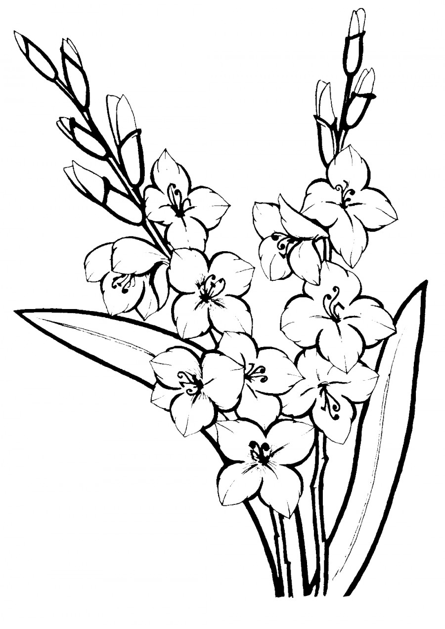 Гладиолусы красивые - раскраска №10086 | Printonic.ru