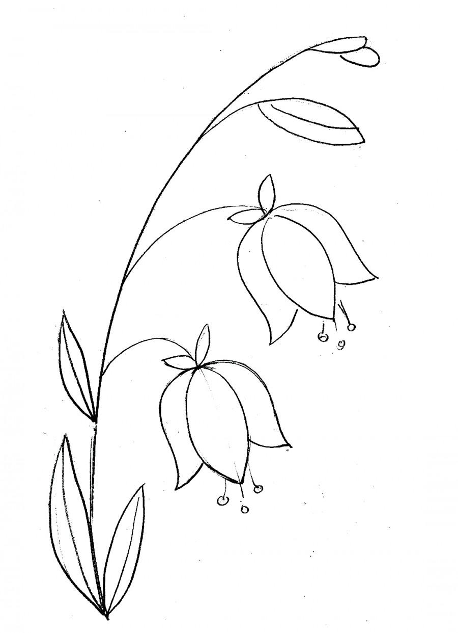 Нежный колокольчик - раскраска №12678   Printonic.ru