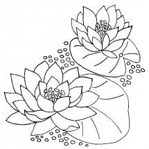 Раскраски лилии: распечатать или скачать бесплатно ...