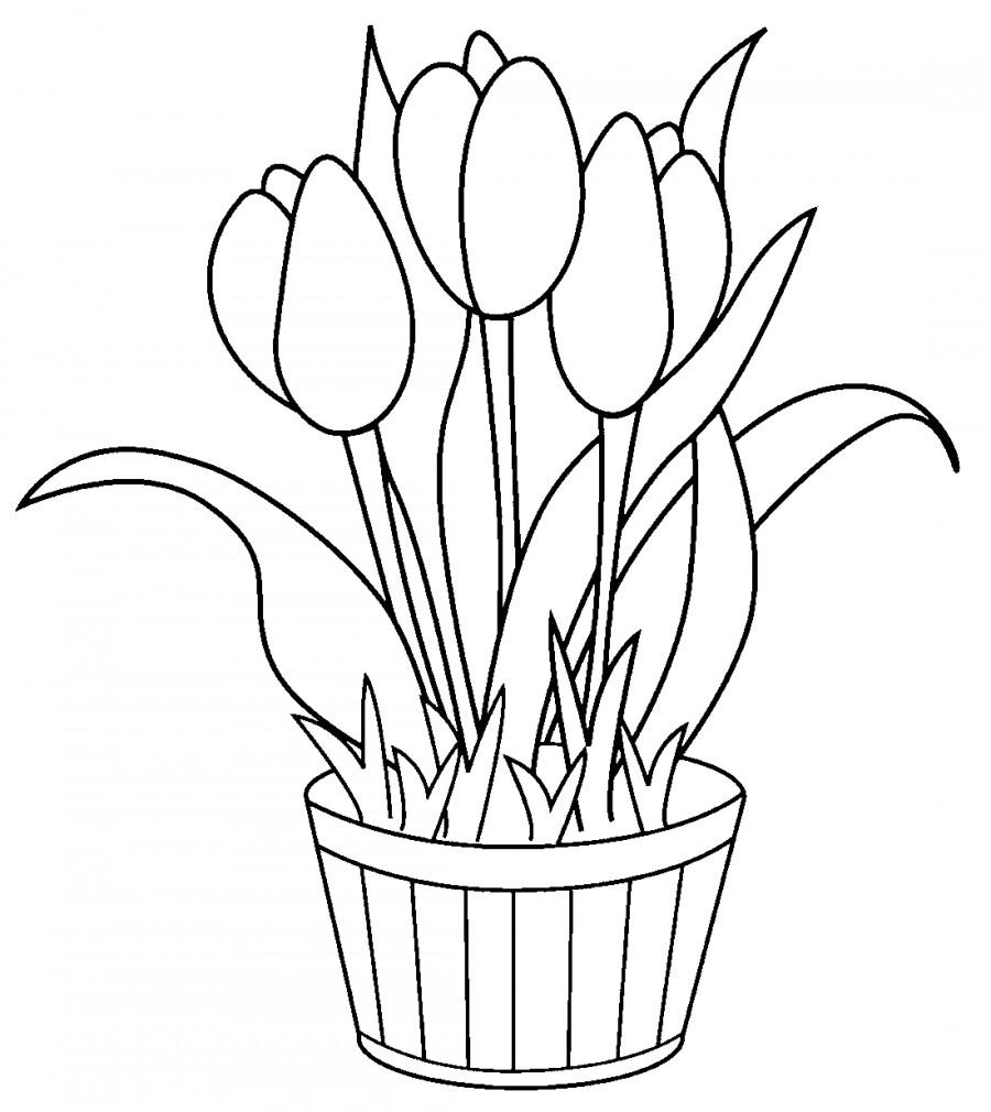 Тюльпаны в кадушке - раскраска №4033   Printonic.ru