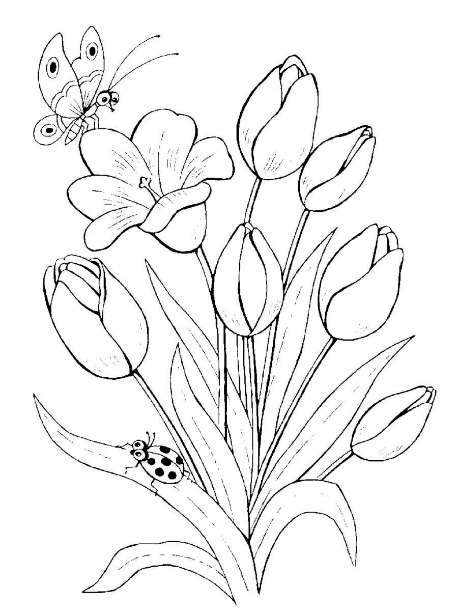 Тюльпаны и бабочка - раскраска №14070   Printonic.ru