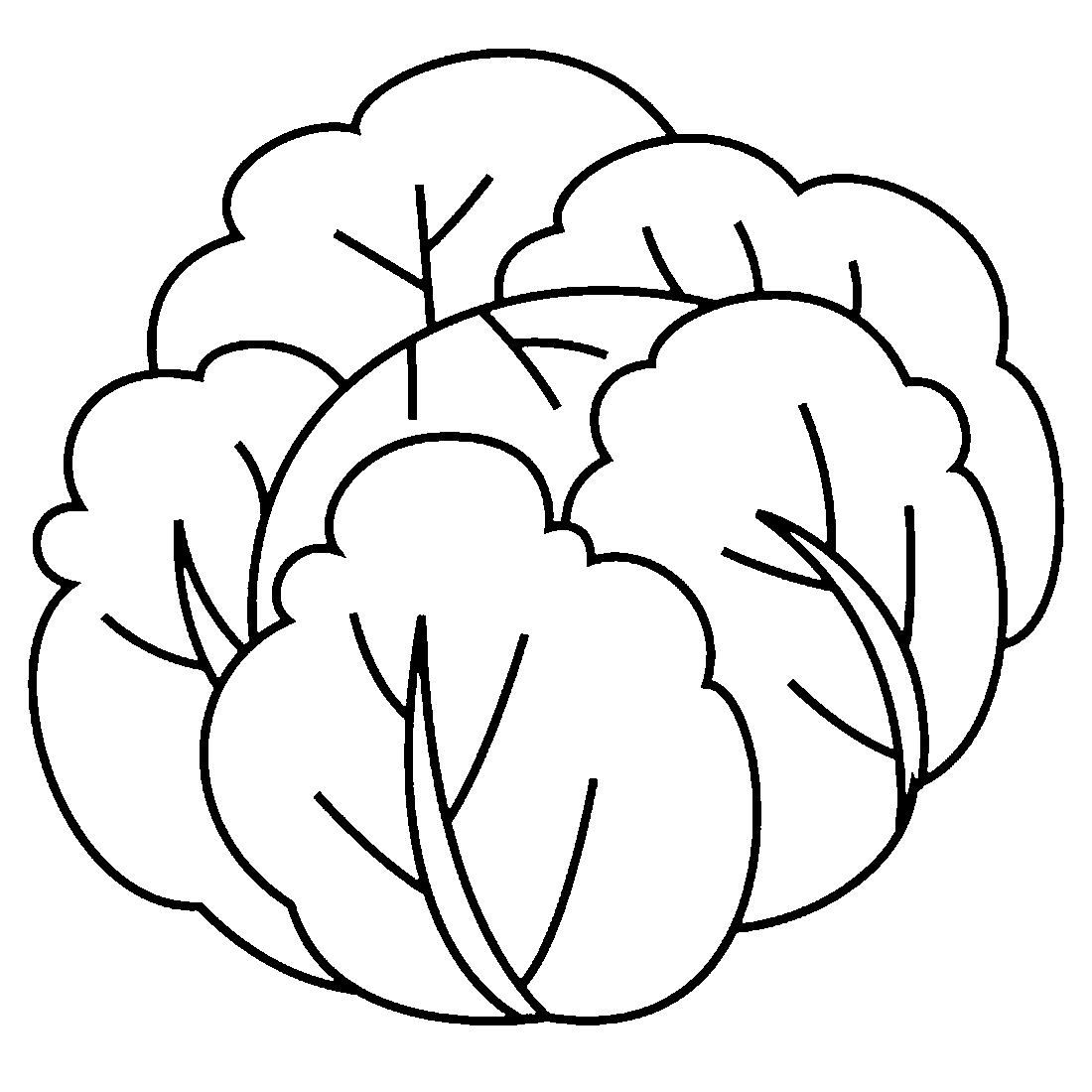 Картинки для детей карандашом капуста