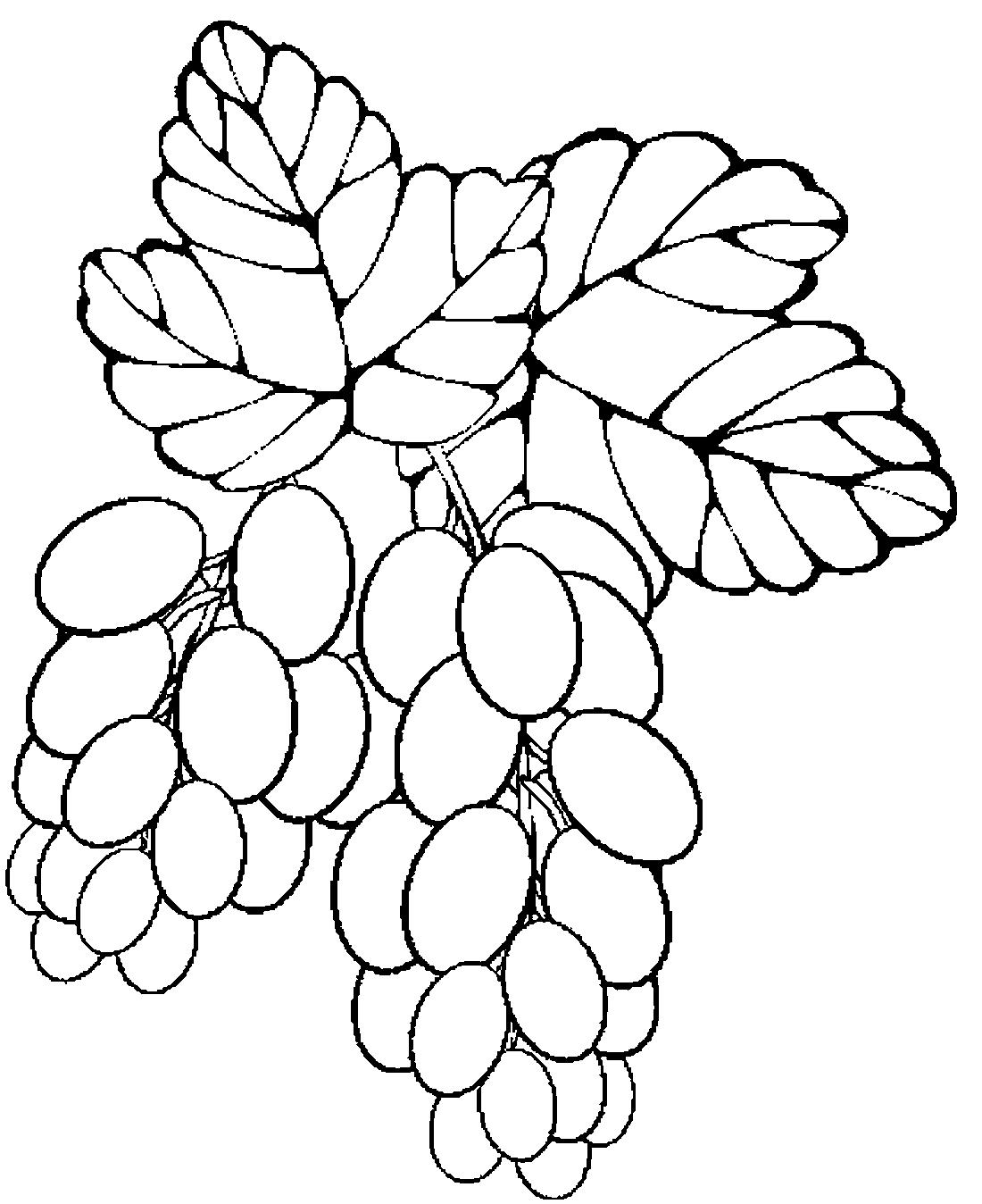 Картинки раскраски виноград
