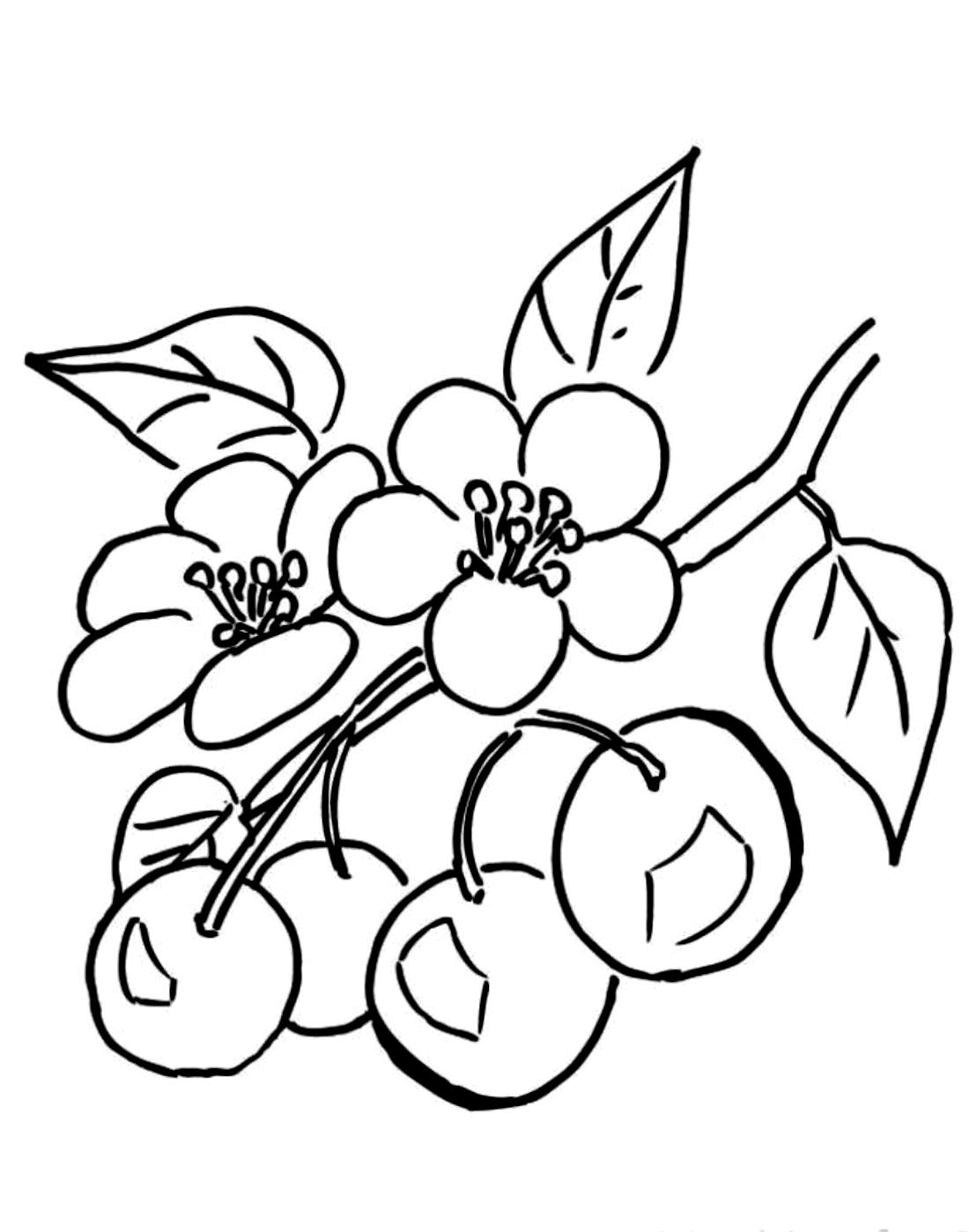 обусловлено яблоневый цвет картинка раскраска легкие, простые