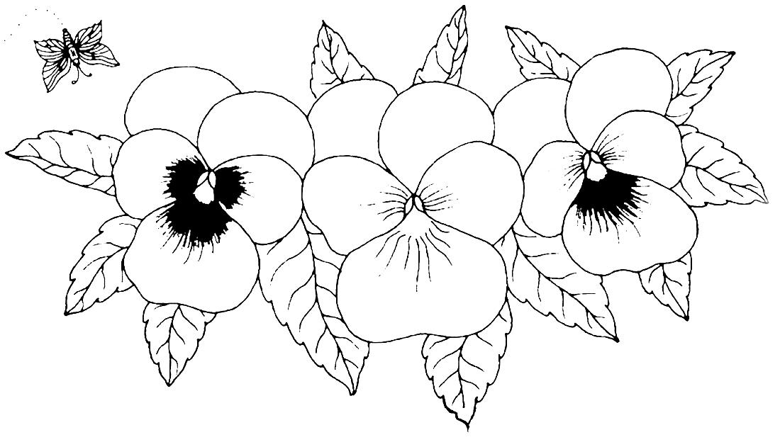 Большие цветы анютины глазки - раскраска №3972 | Printonic.ru