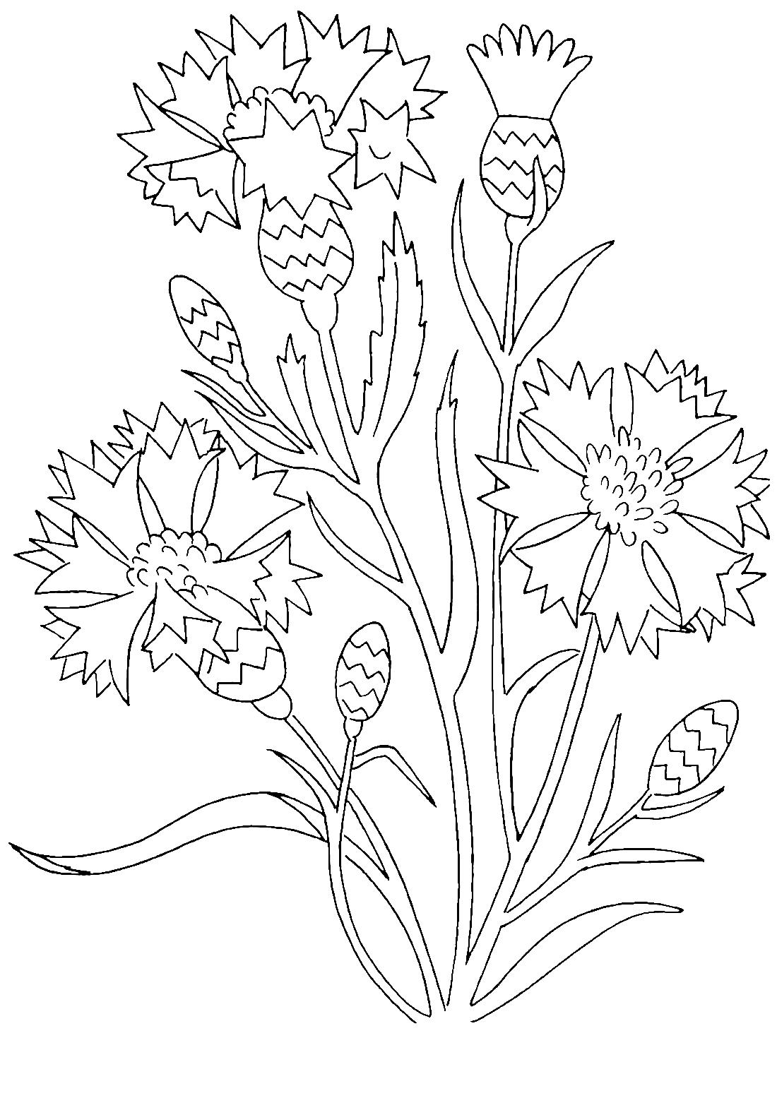 Цветы васильки - раскраска №6661 | Printonic.ru