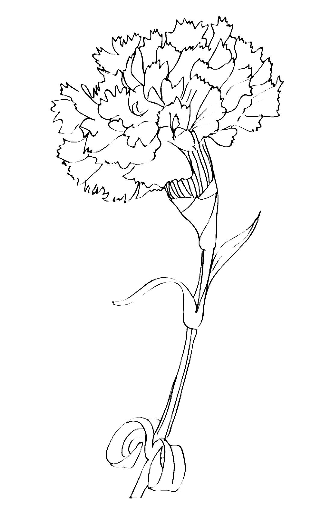 Крупная гвоздика - раскраска №8614   Printonic.ru