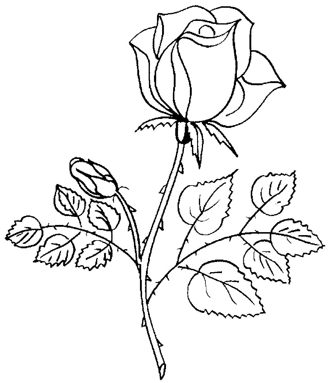 раскраски розы красивые вашим услугам большое