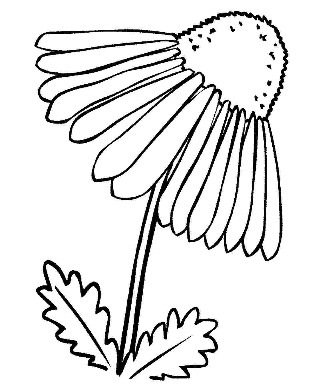 Большая ромашка - раскраска №3913 | Printonic.ru
