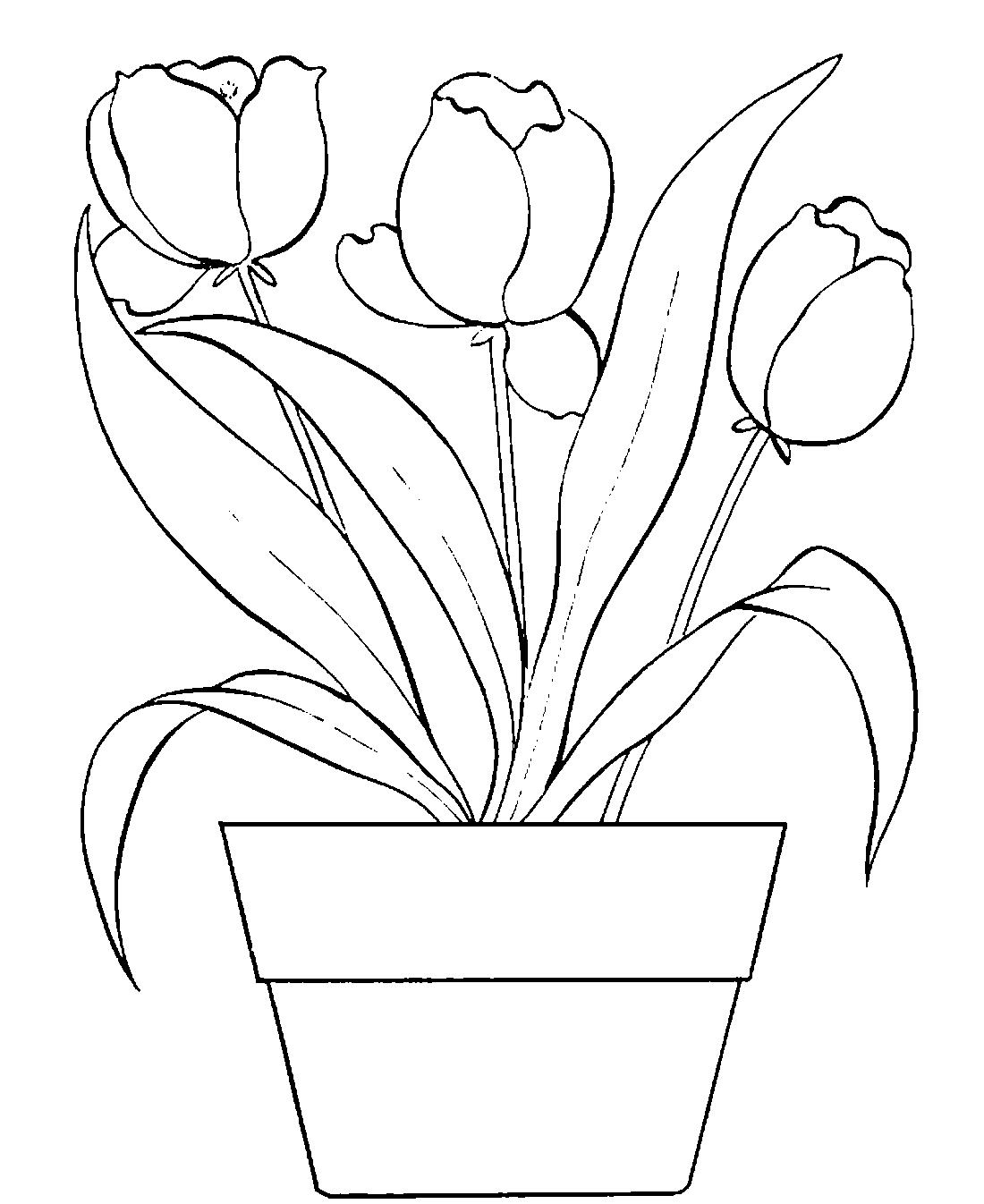 Тюльпаны в вазоне - раскраска №4116   Printonic.ru