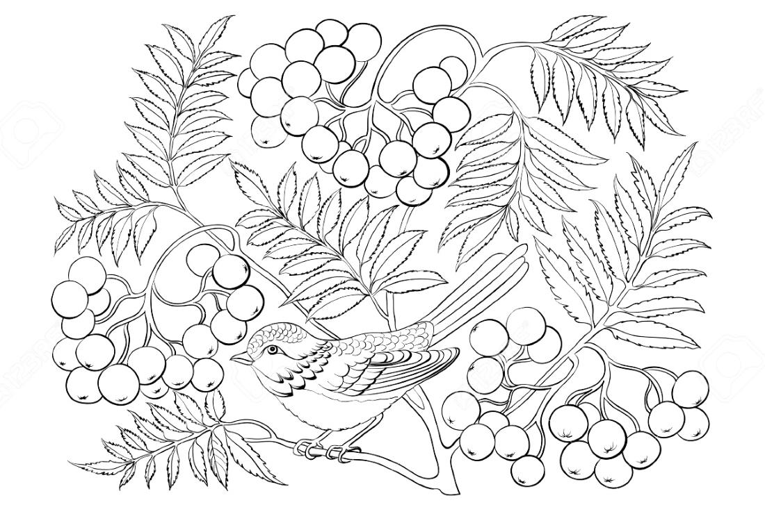 Ягоды и птичка - раскраска №4036 | Printonic.ru