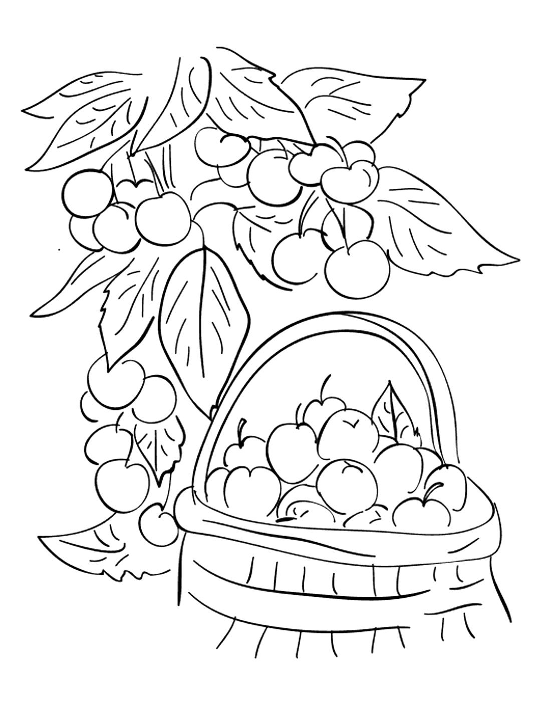 Ягоды и яблоки - раскраска №13542 | Printonic.ru