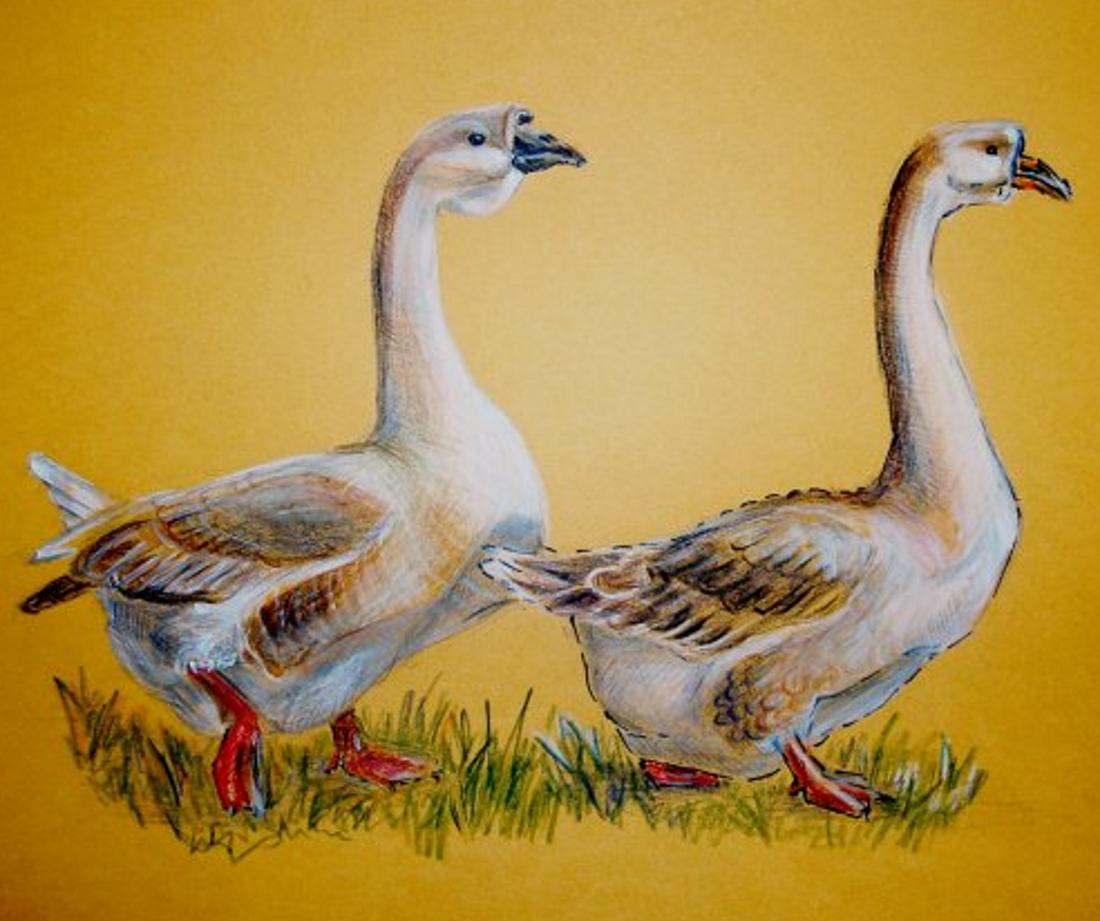 Картинки и рисунки гусей