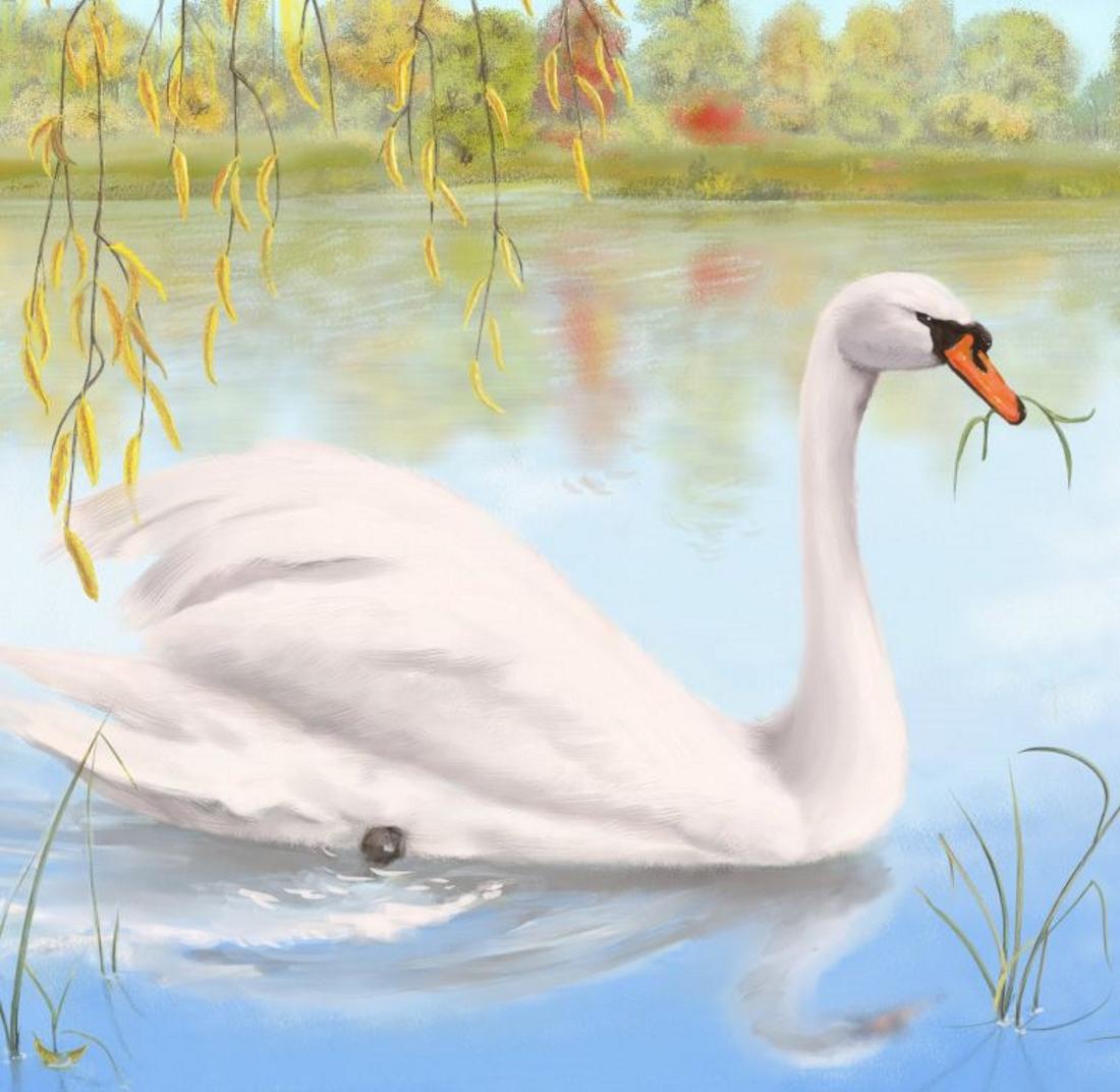 Лебедь картинка для детей нарисованные