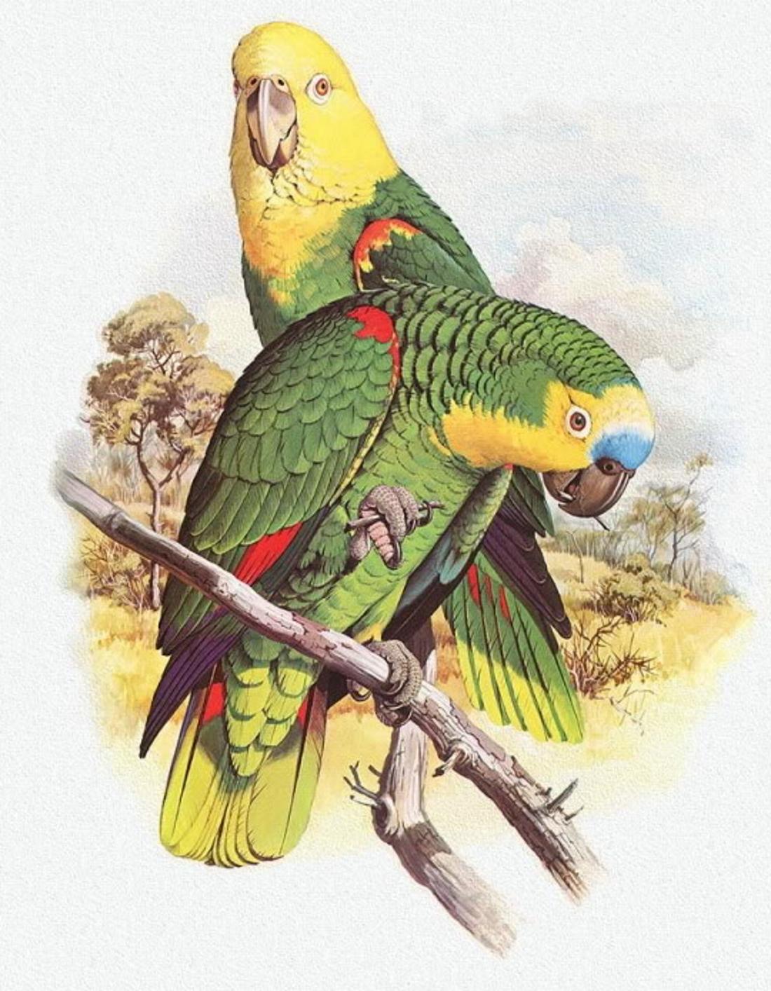 рисунок попугаев как живые моста перевернут соединяется