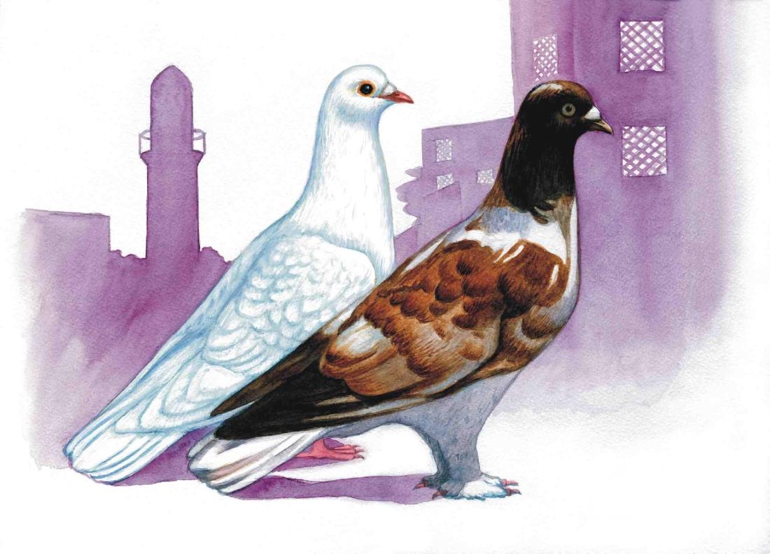 Рисунок голубя в картинках