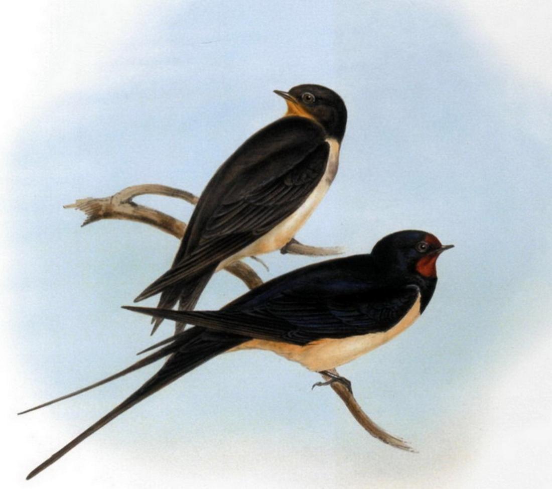 организация картинки с изображениями птиц соцсетях появился