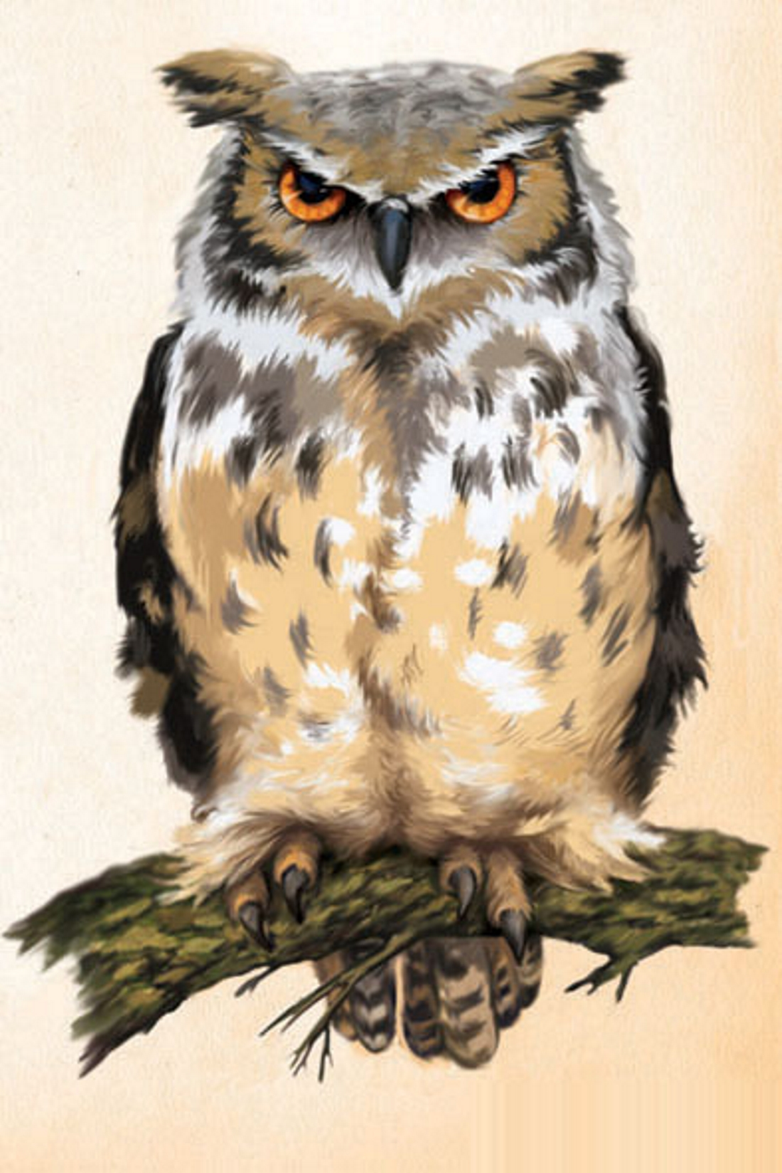 Картинка нарисованная сова для детей